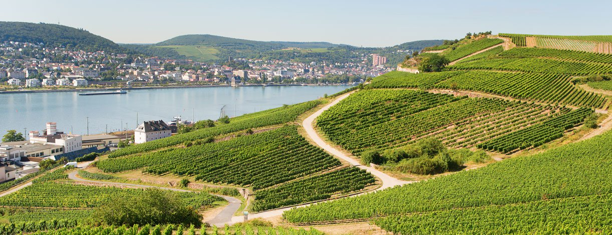 Vineyards in Rudesheim am Rhein