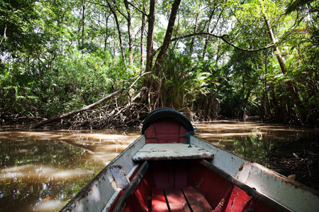 Boat front and Mangrove tree roots by the Amazon river