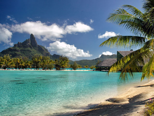 Clear blue sea and trees on beach in Bora Bora