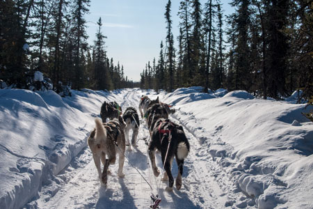 Dog sledding in Kirkenes, Norway
