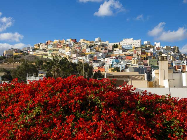 View of Las Plamas with red flower bush, Spain