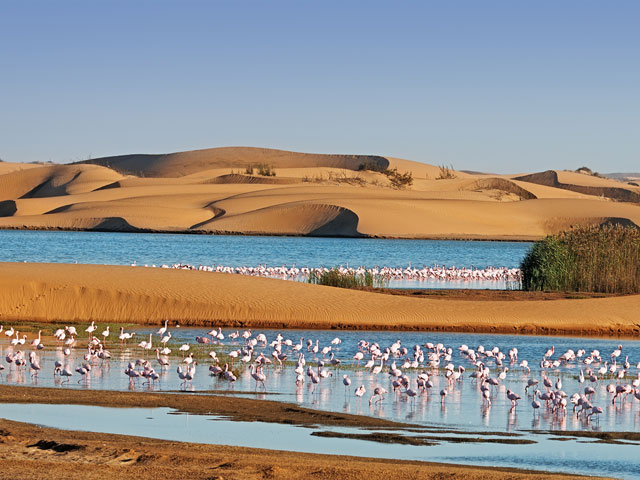 Flock of flamingos in a lagoon surrounding by sand dunes on Pelican Point Walvis Bay Namibia