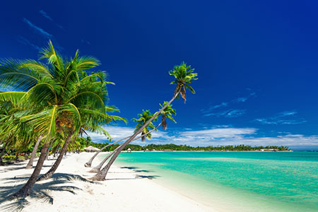Palm trees over white beach in Fiji