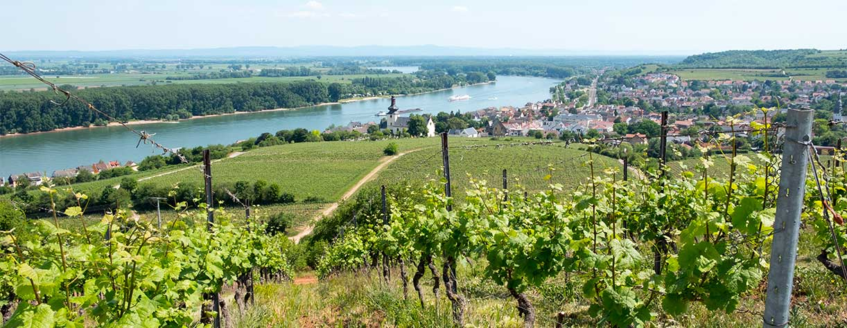 Ariel view over Nierstein with vineyards, Germany