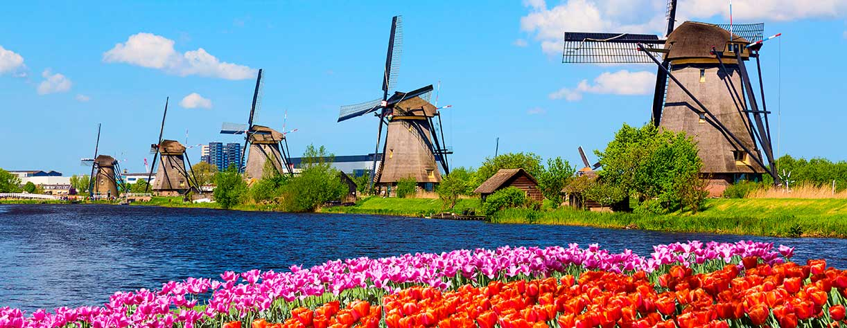 Famous windmills in Kinderdijk village with a tulips, Netherlands