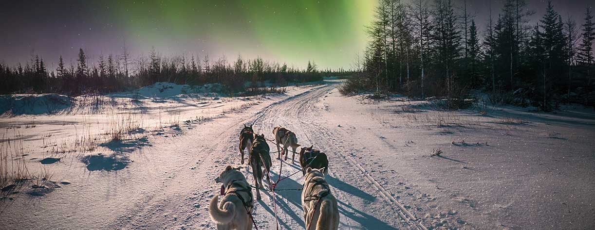 Dog sledging in Tromso, under the northern lights, Norway